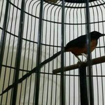 Kaisar Burung