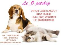 Le-O PetShop