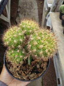 SAHABAT.kaktus