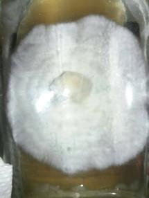 Mabruuk Cell
