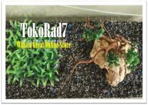 tokorad7