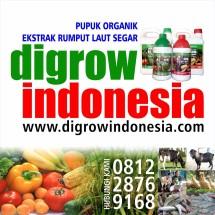 DIGROW Indonesia