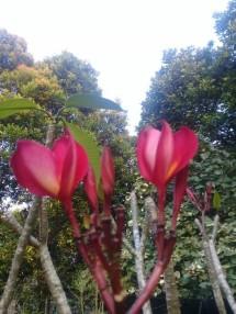 ari flora