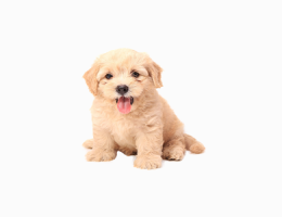 Perawatan Anjing