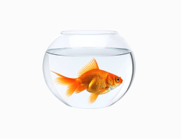 Perawatan Ikan