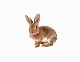 Perawatan Kelinci
