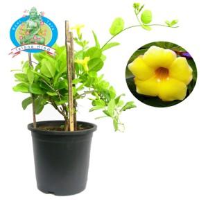 Floral Foam Busa Gabus Bunga Oase Oasis Basah Merangkai Bunga Hidup ... f83111a86e