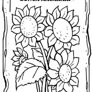 Jual Kanvas Sketsa Bergambar Seri Buah Dan Bunga Isi 10 Lembar Kab Karawang Hans Collect Tokopedia