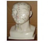 Model Akupuntur Kepala