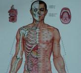 Gambar Akupuntur