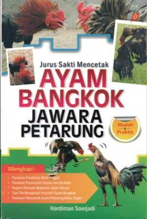 Jurus Sakti Mencetak Ayam Bangkok Jawara Petarung h1028