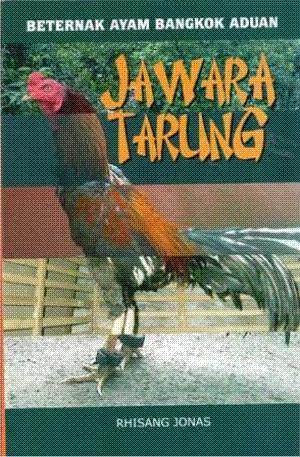 Beternak Ayam Bangkok Aduan Jawara Tarung