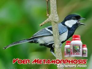 pakan burung glatik (Metamorphosis Bird Food) Voer M