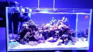 harga Wave Maker double pembuat ombak aquarium ikan arwana hias koki cupang Tokopedia.com