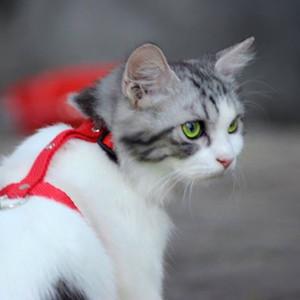 HARNESS H  untuk kucing &  anjing  kecil