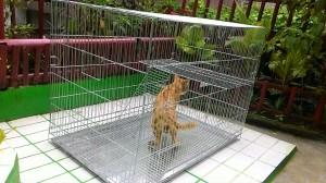 harga kandang kucing Tokopedia.com