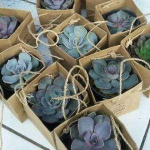 souvenir bunga hidup