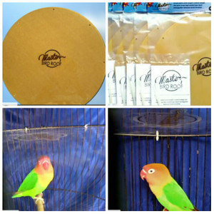Terapi Untuk Lovebird Yang Meruji   Alat Agar Lovebird Tidak Meruji