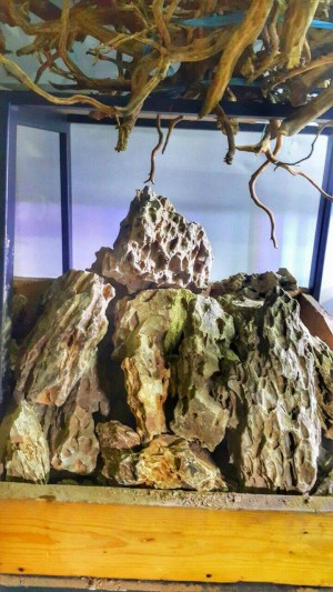 Dragon Stone 1Kg   Aquascape Stone / Batu Aquascape