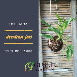 Kokedama - Philodendron jari