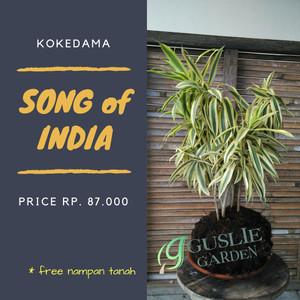 KOKEDAMA - Song of India