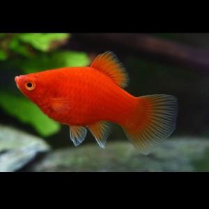 Unduh 60 Koleksi Gambar Ikan Hias Aquascape HD Gratis