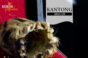Kantong Macan