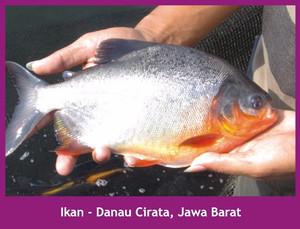 TON Nasa Pupuk Organik Solusi Nutrisi Tambak Udang dan ikan