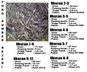 Jual Pakan Pellet Ikan Lp 1 Repacking 1kg Bkn 781 Mitra Pokphand Kab Banyumas Sumberrejeki Karanglewas Tokopedia