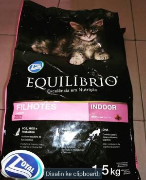 Equilibrio Filhotes Kitten
