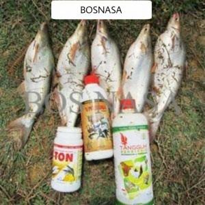 Budidaya Ikan Patin dengan Produk Organik Nasa di jakarta