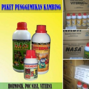 Vitamin PENGGEMUK KAMBING TERLARIS ( POCNASA VITERNA HORMONIK )