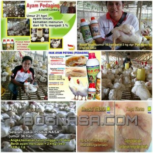 Paket Vitamin AYAM PEDADING ( POC NASA , HORMONIK , VITERNA ) Terlaris