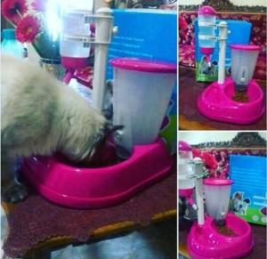 Dispenser Tempat Makan Dan Minum Kucing