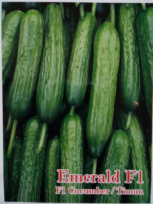 Benih Timun Kyuri Emerald F1 / Timun Jepang / Cucumber (New Day Seed)