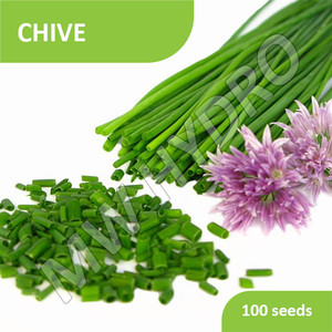 100 Seed - Benih Chive Import
