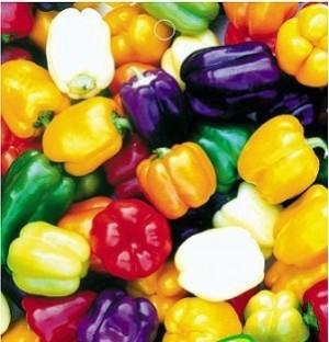 Benih Paprika Warna - Warni / Colorful Bell Pepper (Import)