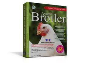 Panduan Lengkap Ayam Broiler