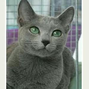 Jual Pasir Kucing Russian Blue Dari Hongkong Lima Liter Wangi Lemon Jeruk Kab Tangerang Pd Mekar Tangerang Tokopedia