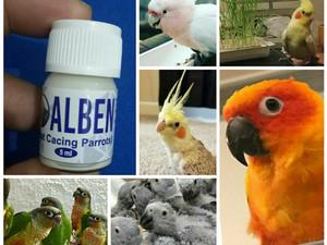 tablete vermox macaw parazitii iarta ma