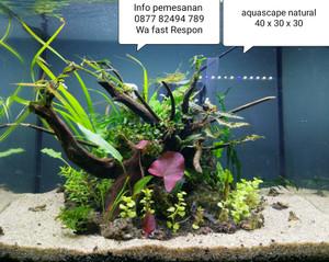 Jual Jasa Setting Dekor Design Aquarium Hias Aquascape Natural Ukuran 40 Cm Jakarta Pusat Aqua Design Juragan Tokopedia