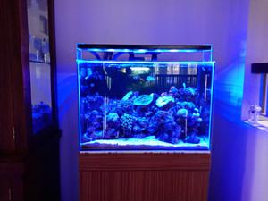 Jual Lampu Led Diy Hpl Aquarium Laut Reef Tank 50 60cm 54watt Kota Bekasi Yana Led Diy Aquarium Tokopedia