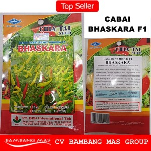 Cabe Rawit Hibrida F1 BHASKARA / Benih Cabai Rawit Hibrida F1 BHASKARA