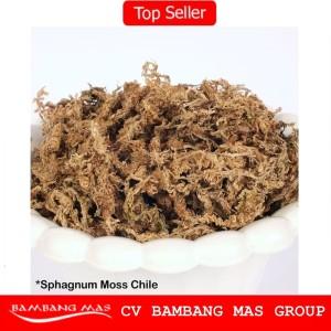 PROMO Media Tanam Sphagnum Moss Chile Kering - Isi 30 Gram