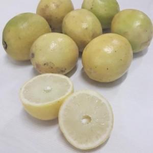 Lemon Law Ga >> Jeruk Lemon 1 Kg Buah Segar Jeruk Lemon Lokal