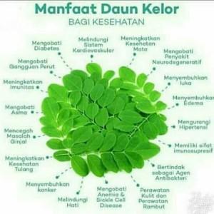 dieta de diabetes manfaat daun kelor untuk
