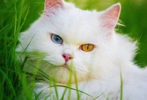 Penyembuhan Kutu Dan Jamur Kucing Ampuh