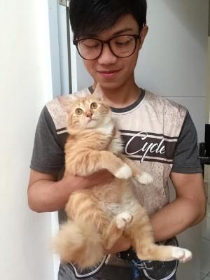 Obat Kutu Skabies Kucing Ampuh