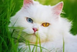 Penyembuhan Bulu Rontok Kucing Ampuh