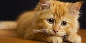 Obat Kutu Untuk Kucing Natural